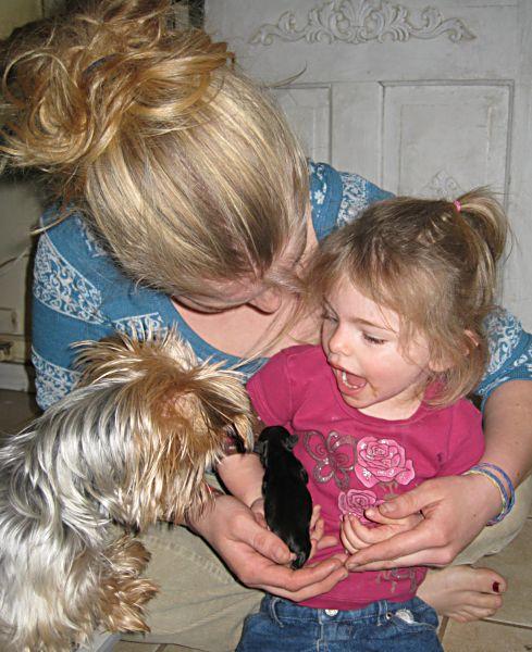 Puppies! 068