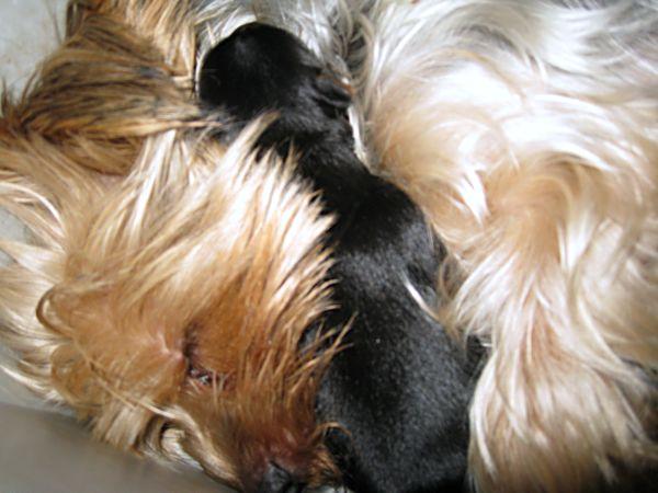 Puppies! 084