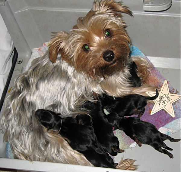 Puppies! 071