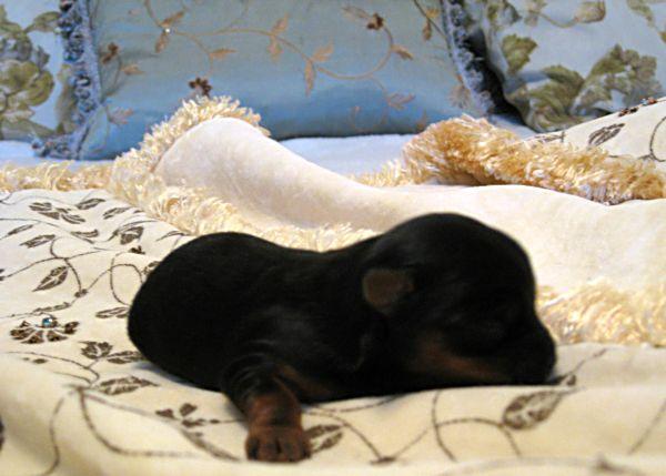 Puppy love swap 041