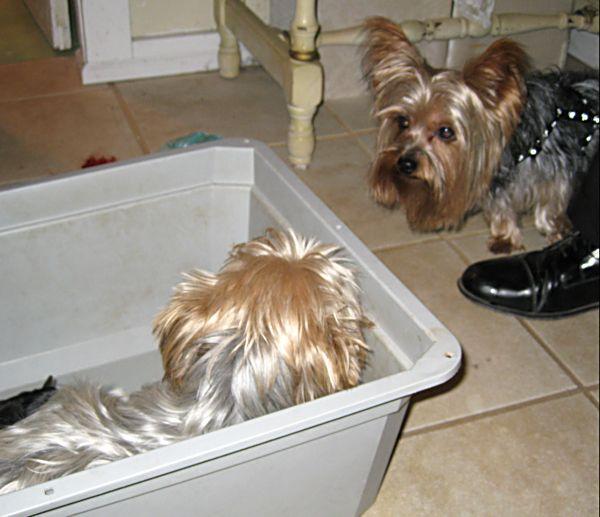 Puppies! 074