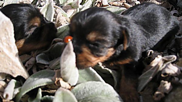 Puppies! 183