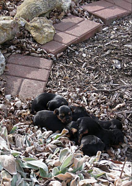 Puppies! 162