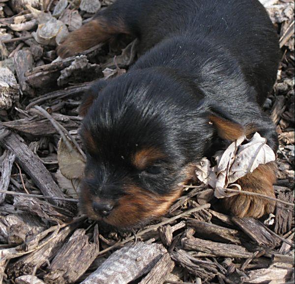 Puppies! 169