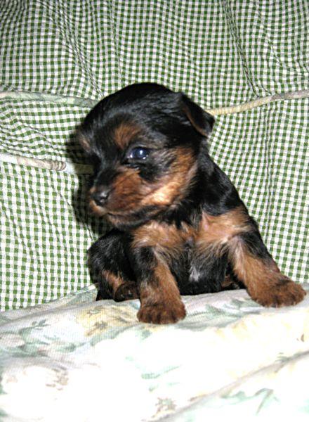 Puppies! 197