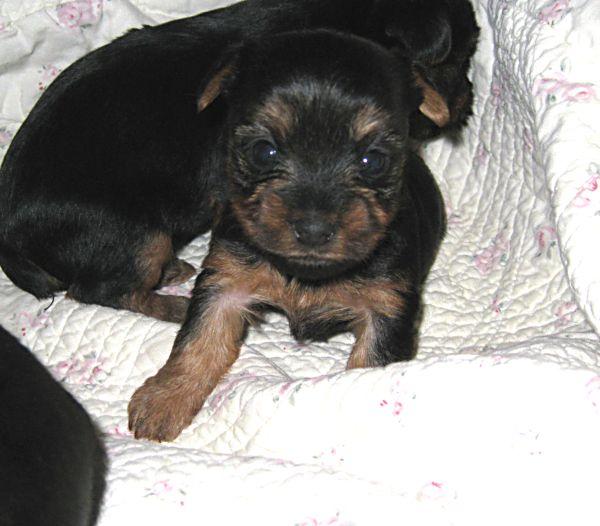 Puppies! 189