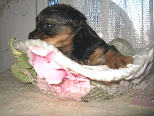 Puppy contest 004