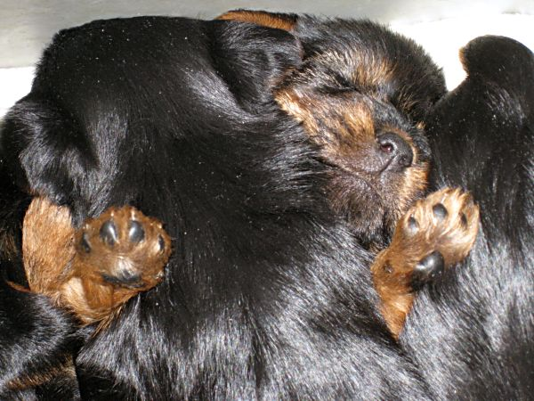 Puppies! 274