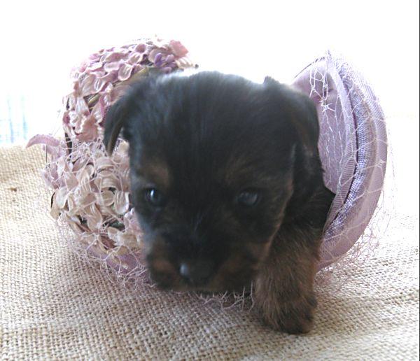 Puppy contest 025