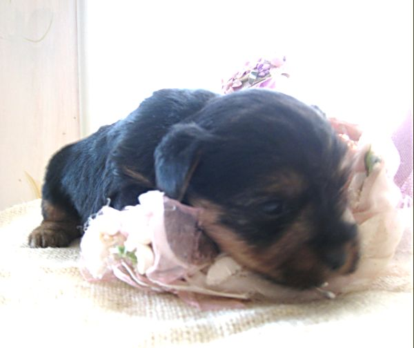 Puppy contest 033
