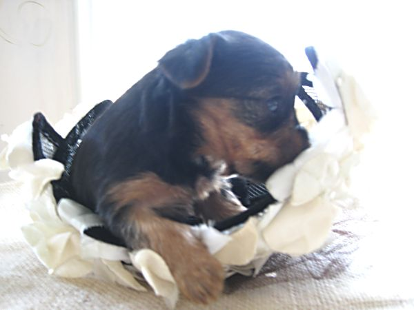 Puppy contest 036