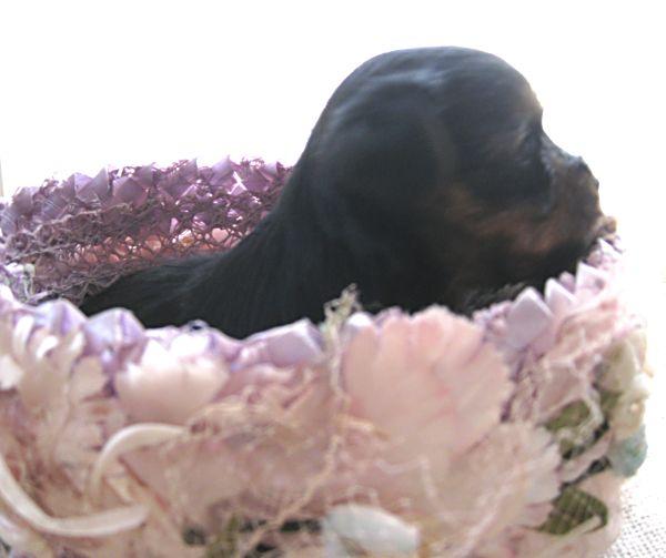 Puppy contest 043
