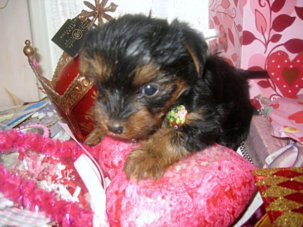 Puppies! 306