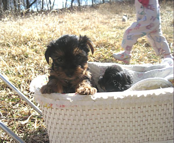 Puppies! 415