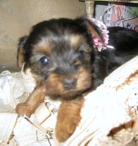 Puppies! 319