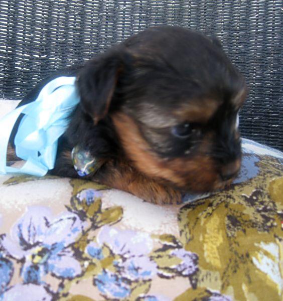 Puppies! 293