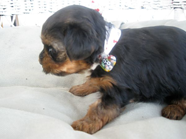 Puppies! 298