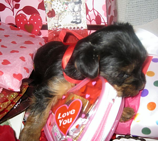 Puppies! 303