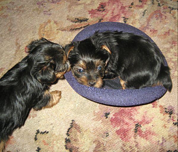 Puppies! 413