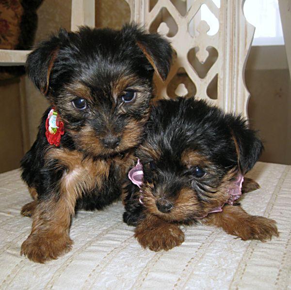 Running puppies 031