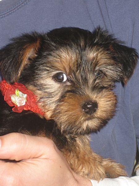 Puppies! 477