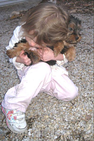 Puppies! 488