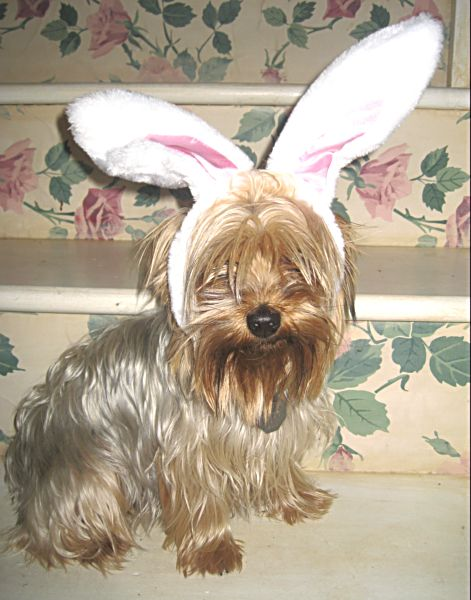 Easter 09 178