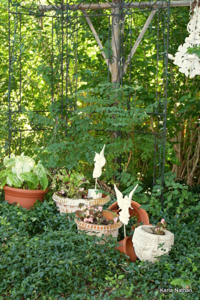 New plants 014