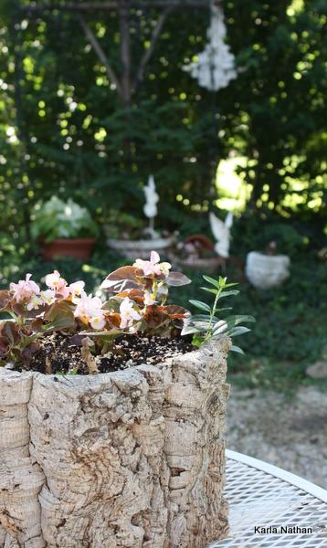 New plants 015