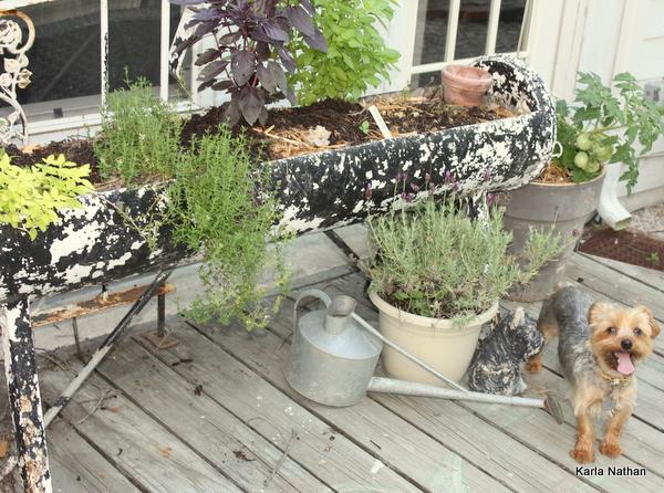 New plants 023