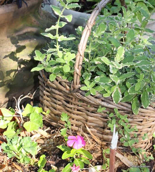 New plants 042