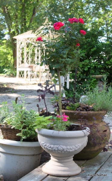 New plants 039