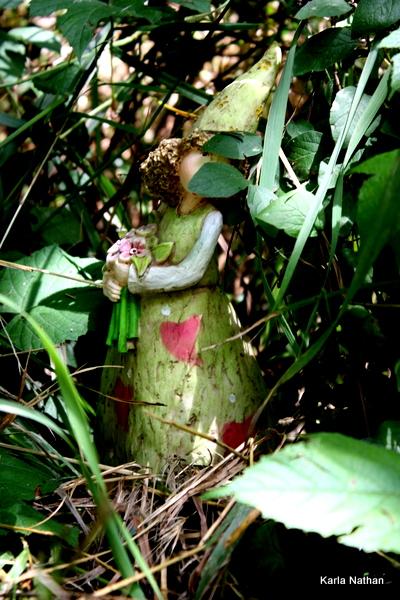 Fairyberrytrail 043