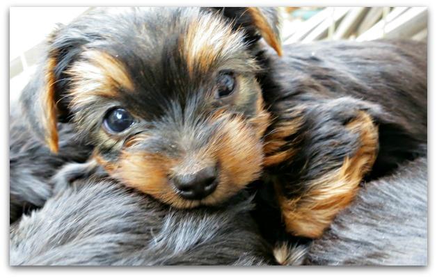 Oustide dogs 012