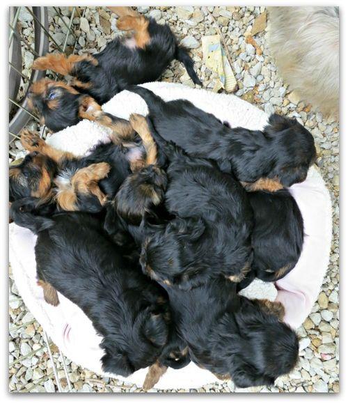 Oustide dogs 008