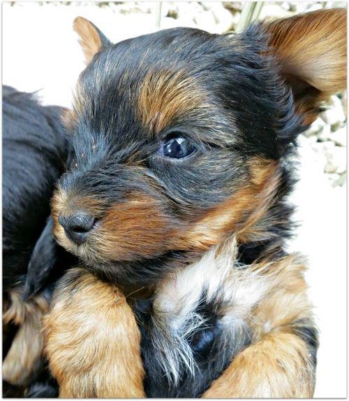 Oustide dogs 015