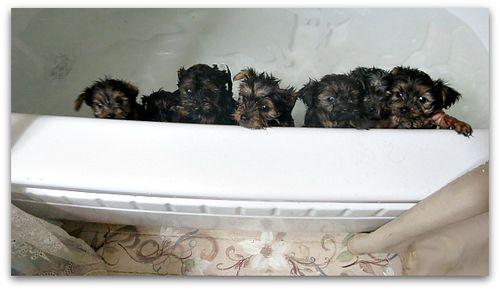 Bathtime 028
