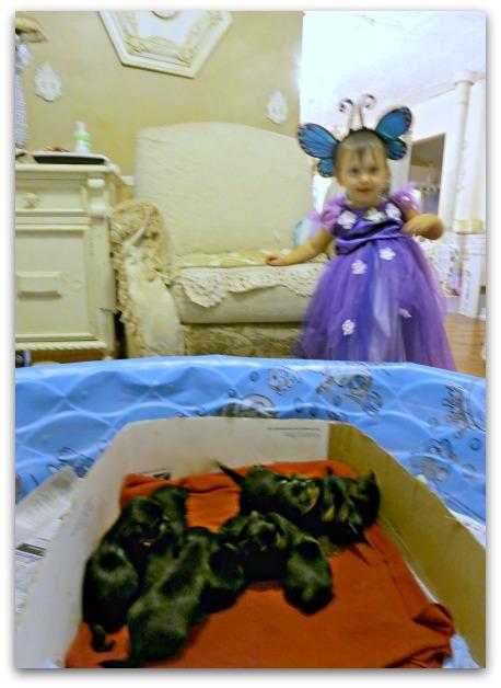 Last fairypages 034