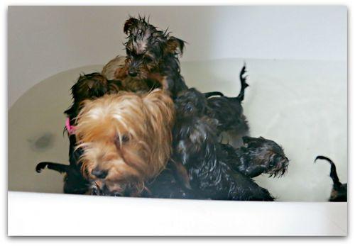 Bathtime 040