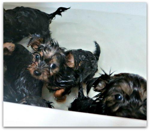 Bathtime 034