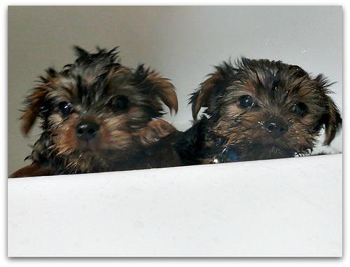 Bathtime 021
