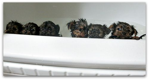 Bathtime 030