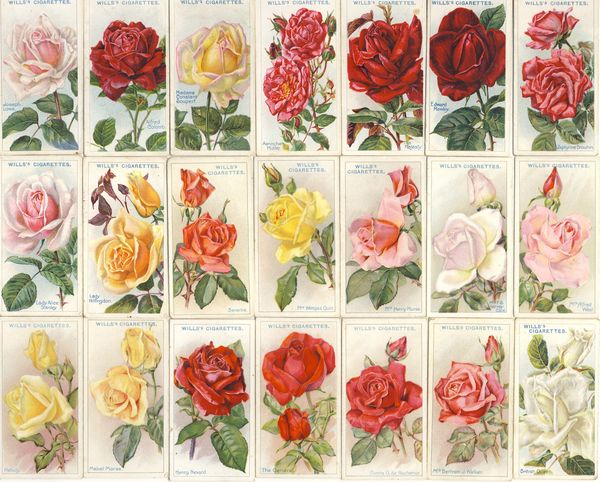 Rose_cigarette_cards