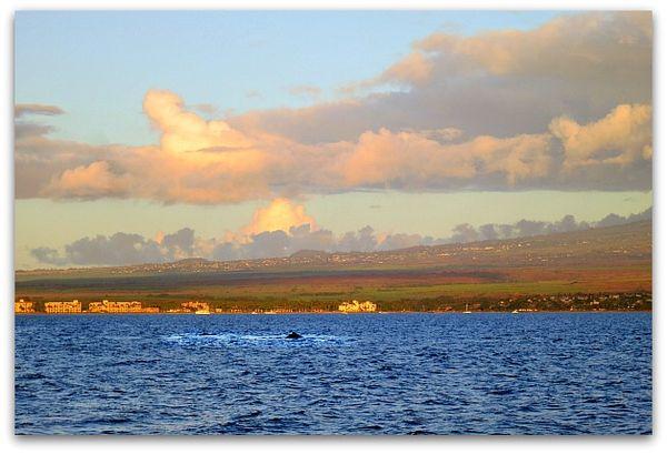 Hawaiimaui 096