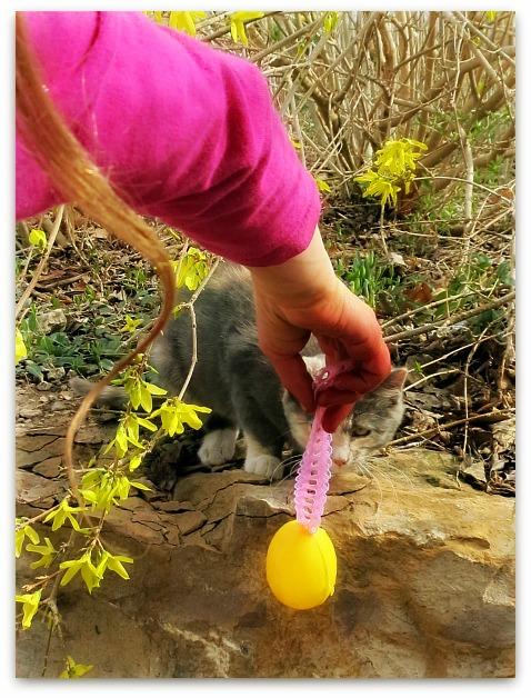 Egg tree 068