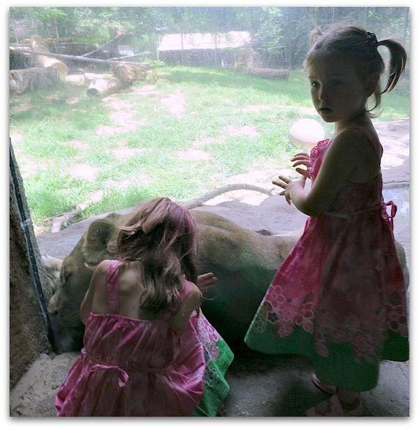 Zoo 065
