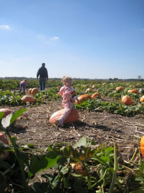 Pumpkinpatcho8_042