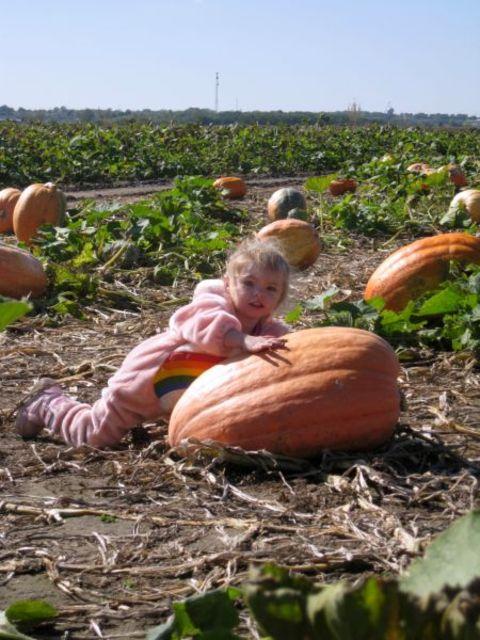 Pumpkinpatcho8_048