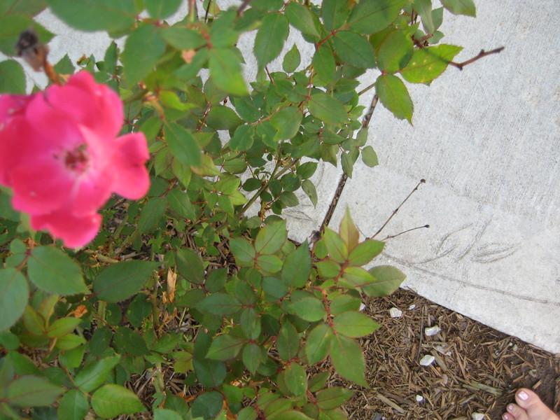 Garden_042