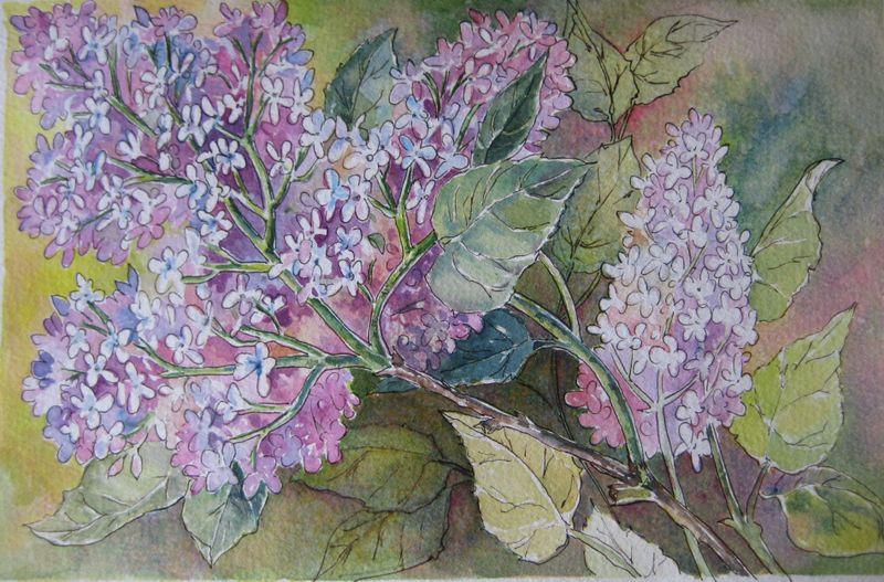 Lilac_002